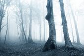picture of eerie  - Eerie and spooky forest with fog and trees - JPG