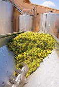pic of crusher  - chardonnay corkscrew crusher destemmer in winemaking with grapes - JPG
