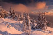 stock photo of snowy hill  - snovy trees on winter mountains - JPG