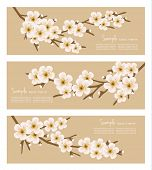Three flower branch banners. Vector.