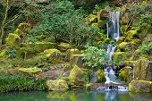 Asian Garden Waterfall flowing into a still pond surrounded by moss covered rocks, trees, and other
