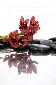 Set of Branch orchid and black stones with reflection