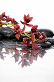 Branch orchid and black stones with reflection