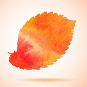 picture of elm  - Illustration of Orange watercolor painted vector elm tree leaf - JPG