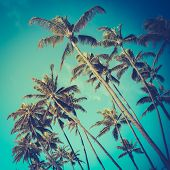 foto of pacific islands  - Retro Vintage Style Photo Of Diagonal Palm Trees In Hawaii - JPG