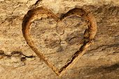 foto of carving  - Heart carved in tree bark - JPG