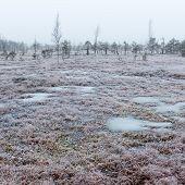 foto of frostbite  - snowy landscape in frosty winter bog in country side - JPG