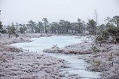 stock photo of frostbite  - snowy landscape in frosty winter bog in country side - JPG