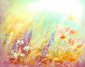 stock photo of meadows  - Meadow flowers lit by sunlight  - JPG