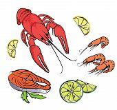 image of craw  - Vector Hand drawn colorful sea food set - JPG