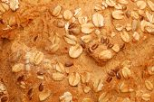 picture of sunflower-seed  - Close - JPG