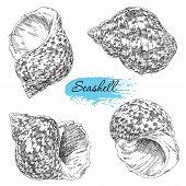 pic of beach shell art  - Beauty set of various sea shells vector - JPG