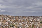 picture of tombstone  - Crowded cemetery with  tombstones in Rabat Morocco Africa - JPG