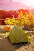 image of pomegranate  - tent in the pomegranate orchard with riped pomegranates - JPG