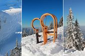stock photo of sled  - Collage - long horn sleds and skiing tracks - winter activity