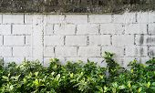 stock photo of creeper  - Green Creeper Plant On White Block Wall Background Texture - JPG