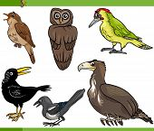 picture of nightingale  - Cartoon Vector Illustration of Funny Birds Set - JPG