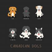 picture of newfoundland puppy  - Set of canadian dogs eps10 vector format - JPG