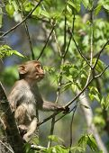 pic of tarzan  - (Wild Florida Monkey) Thank you very much for looking Silver River Florida