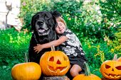 Halloween. Child Dressed In Black Near Labrador Between Jack-o-lantern Decoration, Trick Or Treat. L poster