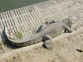 Crocodile Farm, Bangkok poster