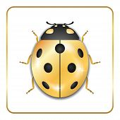 Ladybug Gold Insect Small Icon. Golden Metal Lady Bug Animal Sign, Isolated On White Background. 3d  poster