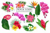 Vector Set Tropical Flowers. Jungle Exotic Strelitzia, Anthurium, Hibiscus, Plumeria, Orchid And Gin poster