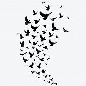 Silhouette Of A Flock Of Birds. Black Contours Of Flying Birds. Flying Pigeons. poster