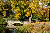 Autumn maple, arched bridge. Dendropark