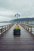 Tulips On The Dock At Rock Point Spray Park In Port Moody, Bc On An Overcast Rainy Grey Day poster