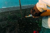 Pruning Roses Early In The Spring. Formation Of A Rose Bush By A Gardener. Secateur In The Hands Of  poster