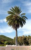foto of punchbowl  - Palm tree on the Punchbowl National Cemetery in Honolulu Hawaii - JPG