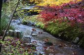 Colorful Fall Color Leaves In Eikando Zenrinji Gardens In Kyoto, Japan. The Jodo Buddhism Temple Dat poster