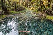New Zealand Temperature Rainforest With Lush Vegetation And Fern Trees Submerged In Water Creek poster
