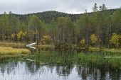 Mountains, Forests, Lakes View In Autumn. Fall Colors - Ruska Time In Iivaara. Oulanka National Park poster