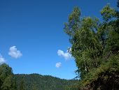 A Look At The Blue Cloudy Sky And High Hills Through The Crown Of A Tree. poster