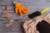 Seeding Items With Seends And Soil. Gardening Glove, Trowel, Soil And Seeds On Wooden Background. poster