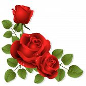 stock photo of red rose  - Three red roses on a white background - JPG