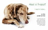 foto of spotted dog  - Cute but shy funny looking mutt dog perfect for pet shelter or rescue and adoption programs - JPG