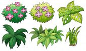 pic of six-petaled  - Illustration of the six ornamental plants on a white background - JPG