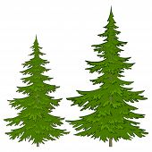 stock photo of conifers  - Christmas green trees - JPG
