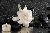 stock photo of gardenia  - spa concept  - JPG
