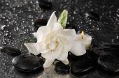foto of gardenia  - gardenia flower and candle on pebbles  - JPG