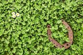 stock photo of fourleaf  - a Lucky charm on clover as a background - JPG