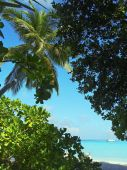 stock photo of kuramathi  - Blue lagoon viewing through the trees and palms - JPG