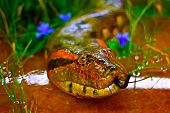 stock photo of green snake  - A digitally constructed painting of a green anaconda snake - JPG