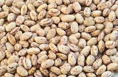 picture of pinto bean  - beautiful macro of colored pinto beans in studio - JPG