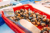 foto of babylonia  - Fresh Spotted babylon snails and escargots on farmer market ready for sale and use for ingredient - JPG
