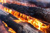 picture of bonfire  - Burning logs in the bonfire - JPG