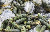 pic of landfills  - Piles of rotten cucumbers on the landfill - JPG
